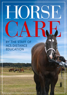Equine Certificate Course | Distance Learning